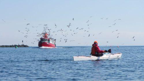 Fehmarn Seekajak Fischkutter Möwen