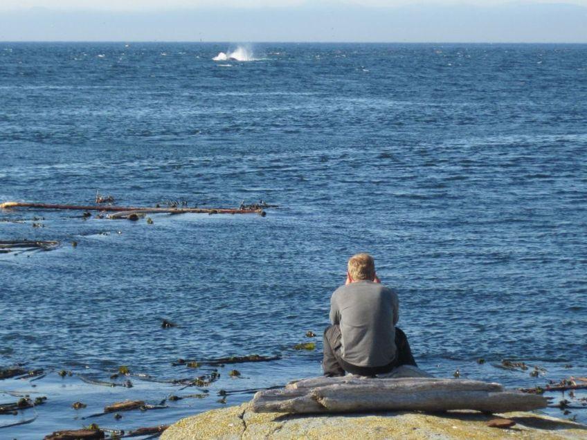 Paddler beobachtet Wale vor Vancouver Islandvom Zeltplatz aus